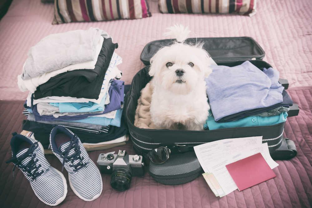 ¿Viajas este verano con tu mascota? Estas son las mejores opciones