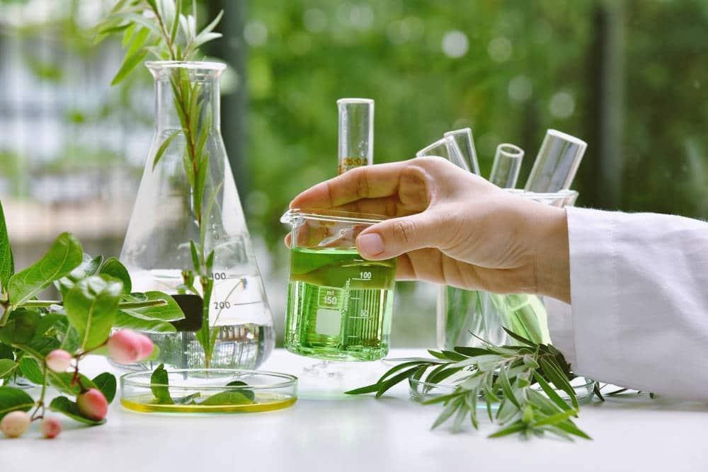 El poder de las plantas y los extractos botánicos